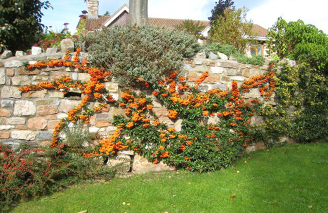 how to use orange as a hedge